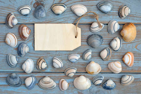 seafruit: Empty copyspace label tag on old wooden background with sea shells