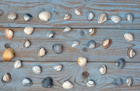 seafruit: empty copyspace on old wooden background with sea shells Stock Photo