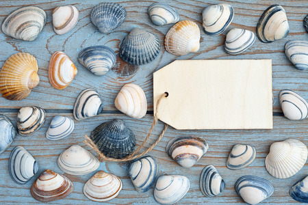 seafruit: gray blue old wooden background with empty frame label and sea shells