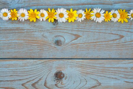 field of flowers: Background of gray blue old knotted wood with line row of daisies and buttercups field flowers