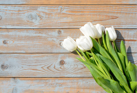 Row bunch of white tulips on old gray blue gray wooden background with empty space photo