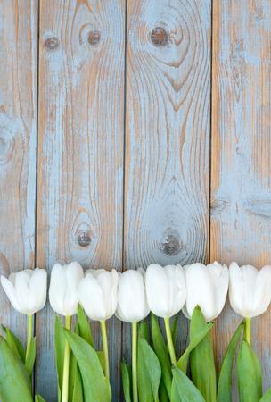 bouquet fleur: tas de Rang�e de tulipes blanches sur vieille gris bleu fond des �tag�res en bois avec un espace vide