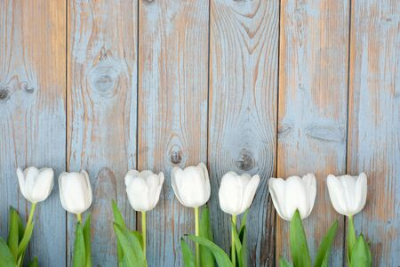 Row bunch of white tulips on old gray blue wooden shelves background with empty space photo