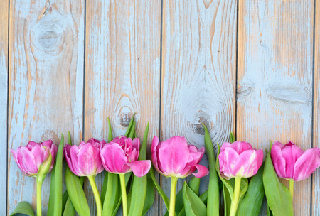 Row bunch of pink tulips on old gray blue gray wooden background with empty space Foto de archivo
