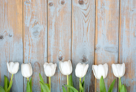 mother board: Row bunch of white tulips on old gray blue wooden shelves background with empty space