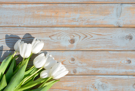 Row bunch of white tulips on old gray blue wooden shelves background with empty space