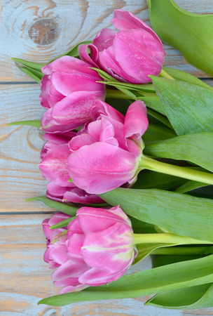Row bunch of pink tulips on old gray blue wooden shelves background with empty space photo