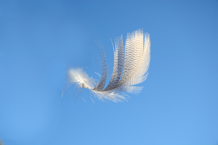 weightless: Blue heaven sky with light white striped down feather floating in the air Stock Photo