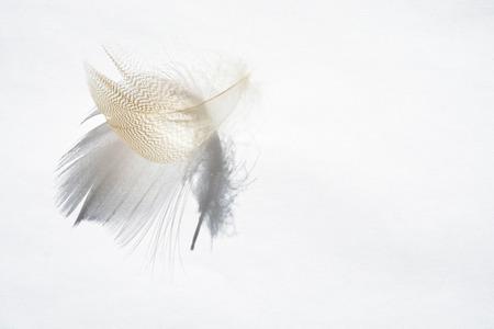 Witte achtergrond met lichtgrijze lege gestreepte donzen met mooie schaduw, soft focus en lege copyspace