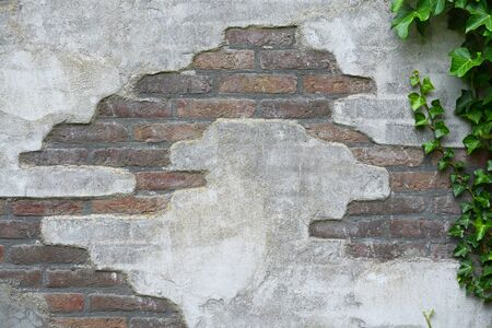damaged cement: detail of a old broken cement damaged brick wall with green ivy tree and empty copyspace Stock Photo