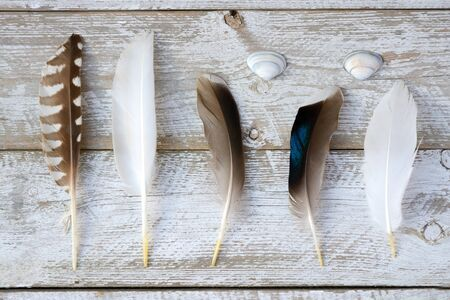 leaved: selection of various bird feathers on a white painted wooden shelves background leaved