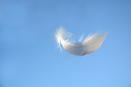 floating: Blue heaven sky with light white striped down feather floating weightless in the air