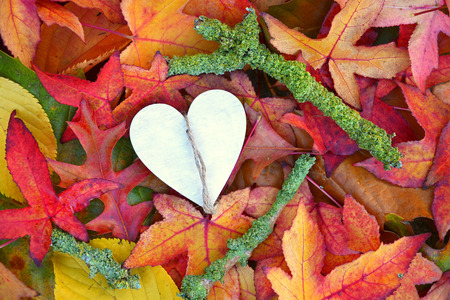 corazon roto: Una gran cantidad de hojas de oto�o coloridas en el oto�o con un coraz�n en forma de coraz�n de madera con el espacio vac�o de la copia Foto de archivo