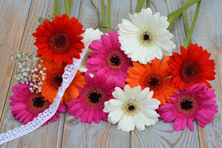 red gerber daisy: Colorful gerber daisies on a old wooden shelves background with empty copyspace