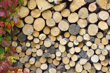 woodburning: still life of stacked fireplace wood branches with autumn leaves fall Stock Photo