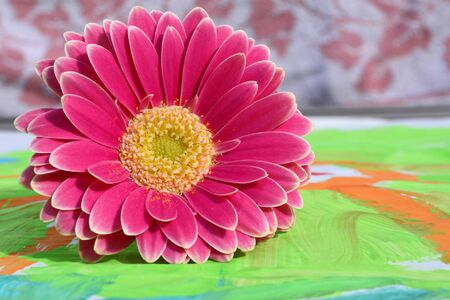 gerber daisy: Detail of gerber daisy on a colorful child painting, gift for Mothers Day or birthday present Stock Photo