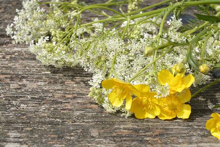 robo: Primer banco de madera o viejo en el parque con flores de campo como botones de oro y hierbas silbar en la primavera