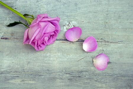 Border row purple or pink roses on a gray old wooden background with empty copyspace