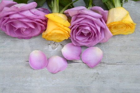 Border row of Pink purple and yellow roses on a gray old wooden background with empty copyspace