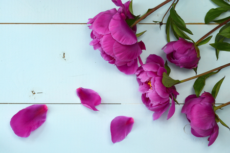 bl: Purple peony on old empty copy space wooden boards. Place for text. Top view background