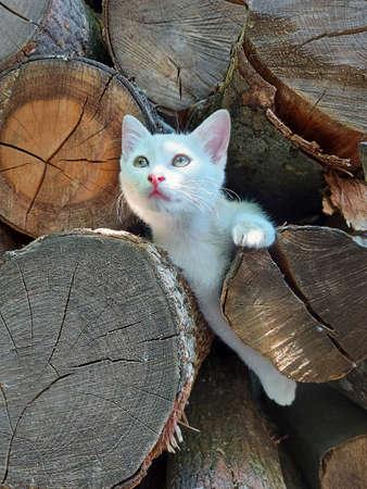 Cute little white kitten in the woods.