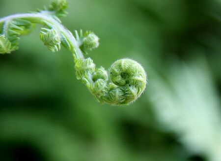 young fern leave Stock Photo - 4661554