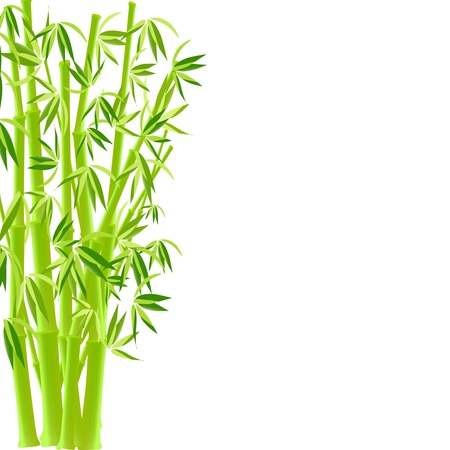 vector illustration of bamboo Illustration