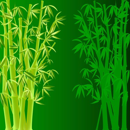 vector illustration of bamboo Vector
