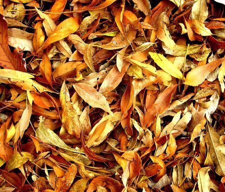 Autumn Leaves. Stock Photo - 6174432