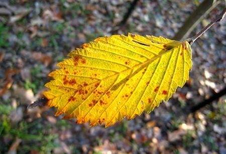 yellow leaf Stock Photo - 6500615