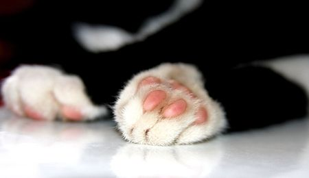 hand print: close-up cats paw