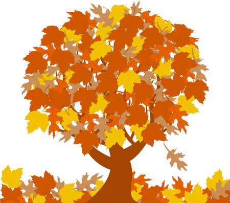 vector illustration of the autumn tree  isolated on white background. Illustration