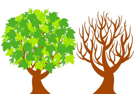 vector illustration of the two trees represent of different seasons  isolated on white background.