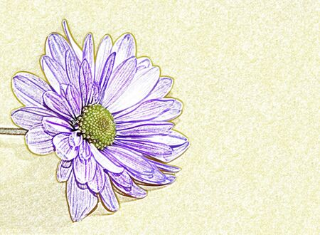 temperate: flower illustration Stock Photo