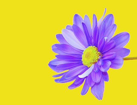 painterly effect: illustration of blue single flower