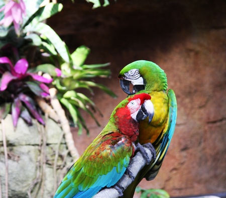 two colorful parrots are sitting on the branch Stock Photo - 11170153