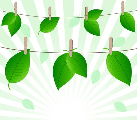 clothespeg: Vector illustration of the leaves on rope on sunny background Illustration