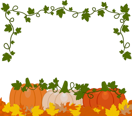 Vector illustration of a background of orange and white pumpkins sitting on autumn leaves. Pumpkins are different sizes on white background. Ilustracja