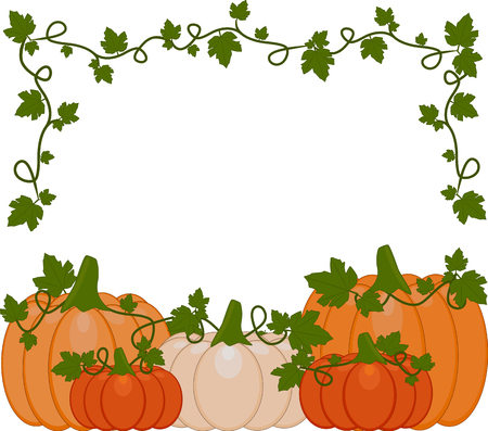 Vector illustration of a background of orange and white pumpkins. Pumpkins are different sizes on white background.