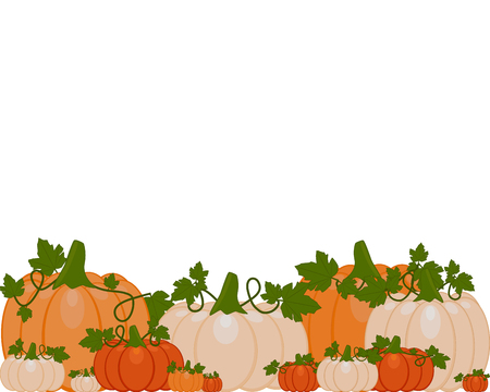 Vector illustration of a background of orange and white pumpkins sitting on autumn leaves. Pumpkins are different sizes on white background. Vettoriali