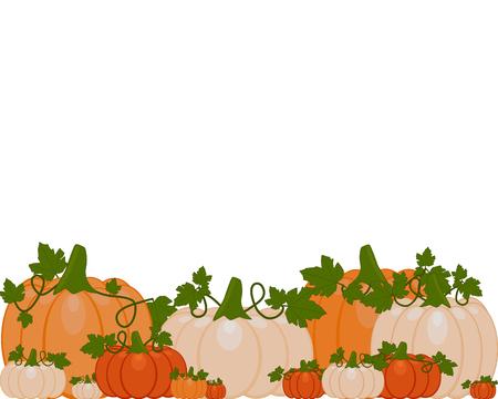 Vektorillustration eines Hintergrunds von orange und weißen Kürbissen, die auf Herbstblättern sitzen. Kürbisse sind verschiedene Größen auf weißem Hintergrund.