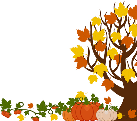 Vector illustration of a fall tree with leaves, orange and white pumpkins . Pumpkins are different sizes on white background. Illustration