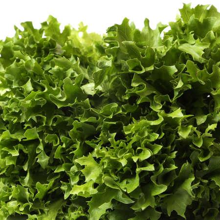 frilled: Lettuce Close up of fresh frilled lettuce.