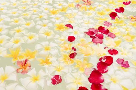 Spa bain plein de fleurs de frangipanier pour la détente Banque d'images - 85942208