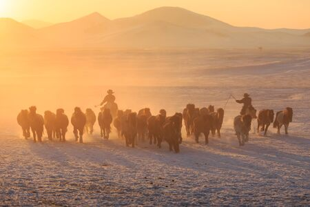 mongolia horse: The shepherd boy Stock Photo