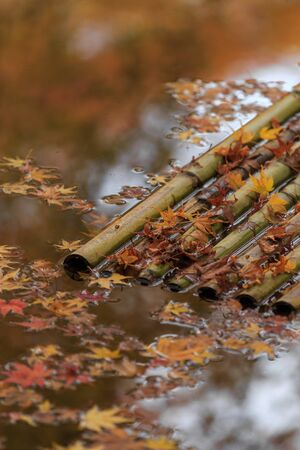 A Bamboo Raft Floating on water with Maple Leaves Fallen on it 版權商用圖片