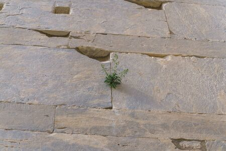 Ancient marble stone wall background and green grass growing in stone gap Stockfoto
