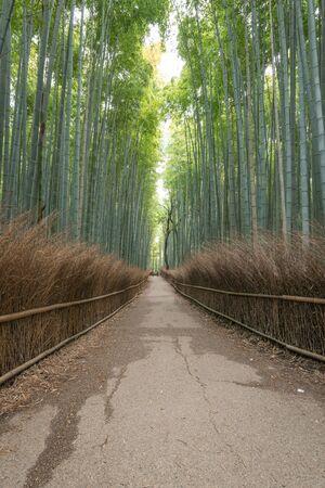 Arashiyama Bamboo Forest in summer morning, Kyoto, Japan