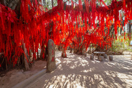 Chinese traditional culture: the red ribbon hanging on a huge banyan tree for wishing