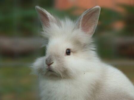 White rabbit in summer